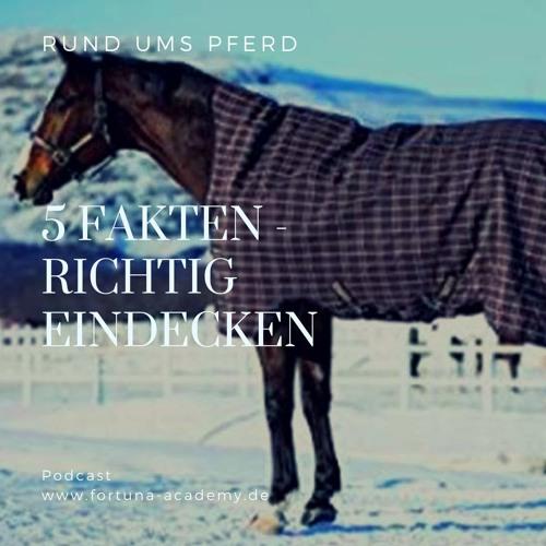 5 Fakten Über Das Eindecken Vom Pferd! Braucht Mein Pferd Eine Decke