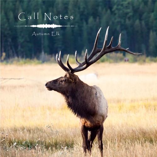 'Call Notes' Episode 7 -- Autumn Elk Rut