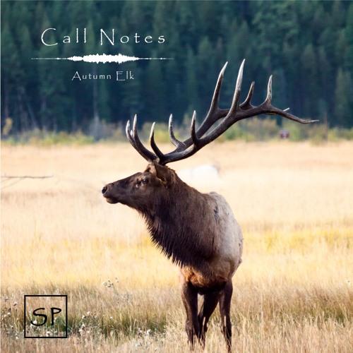 'Call Notes' Episodio 7 -- Wapiti (En Español)