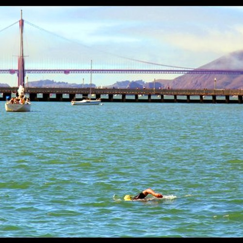 Chicken Of The Sea: Why I Don't Swim at Aquatic Park