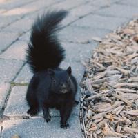 Animal - Photographer mix (feat. Wesley Saylor)