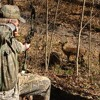 Tips on How to Use Deer Calls to Your Advantage