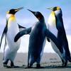 Artworks 000255792536 v9tgox large