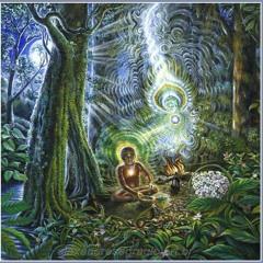 Acoustic Tree - Amazon Dream (proba)
