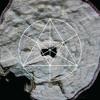 Mysteries of the Deep LXXX - LEECH | COSI