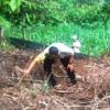 Bangkai Gajah Ditemukan di Kebun Warga Aceh Timur