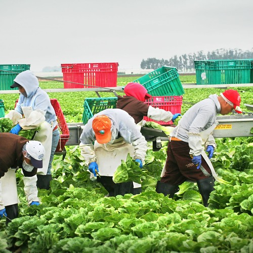 3_Reducing Take Home Pesticide Exposures from Farm Work Clothes (Spanish)