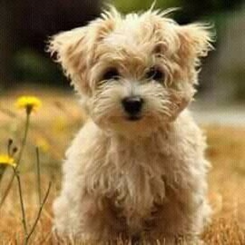 download lagu anjing kacili bassgilano wapka