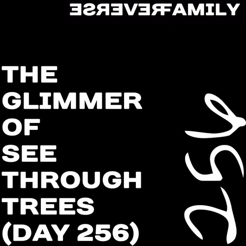 The glimmer of see through trees (day 256)