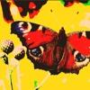 Fluttering Butterflies - Richard Nhoebra