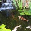I could build a fishpond in the garden if you like
