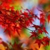Les Feuilles Mortes / The Autumn Leaves