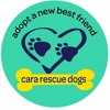 The Open Door - Cara Rescue Dogs