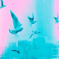 Trol w Cyrku + Ofu - Ptaki