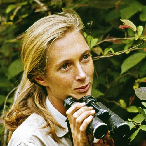 Jane (Director Brett Morgen)