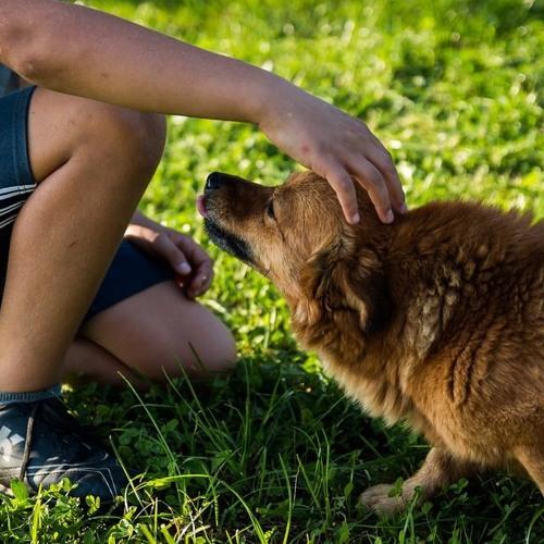 Podcast #Wissenschaftsradio: Hundebiss-Vorbeugung mit Frau Arhant, Forscherin VetMed Universität