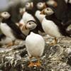 A Little Kingdom - End Credits (Lundy Island/National Trust)