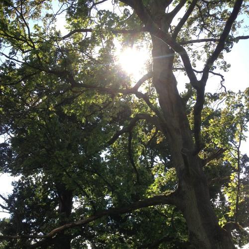 Basic Self-Kindness Meditation