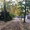 Autumn Goodbye