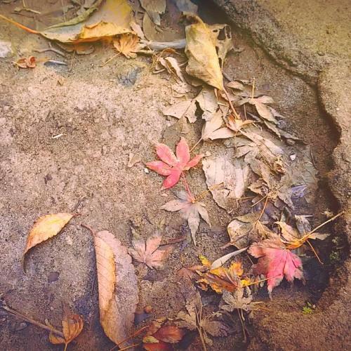 Naoya Sakamata - Autumn Escape - Emotional Piano Music MP3