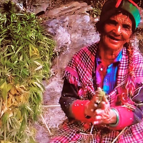 Elephant - holy singing magical malana cream women 151bpm