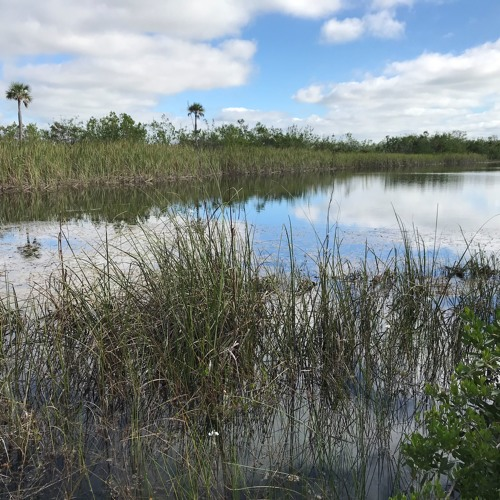 Solo Travel Girl's Adventures: Portions of Florida Everglades are Open for Business