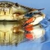 Crab Canon - Movement 1 - A Dflat See
