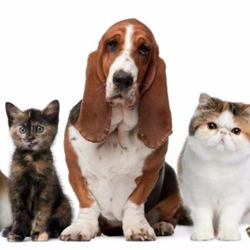 Mascotas, entendiendo a tus mascotas !