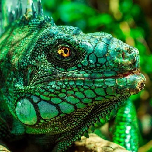 Orgasmatron In The Iguana (extract)