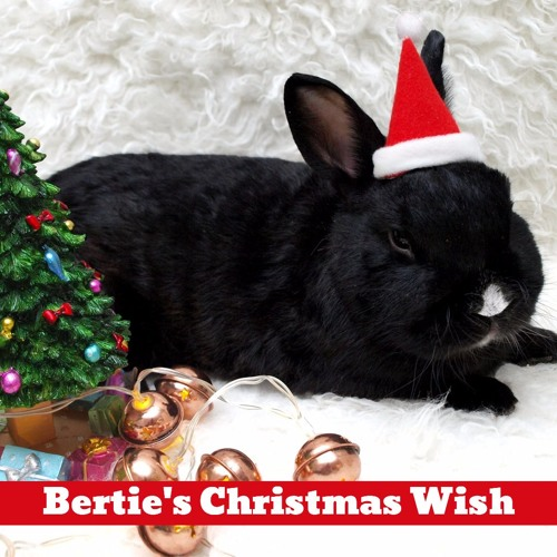 Bertie's Christmas Wish - Alison Wood