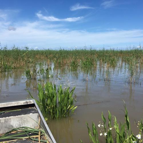 The Battle Of Coastal Restoration In Louisiana