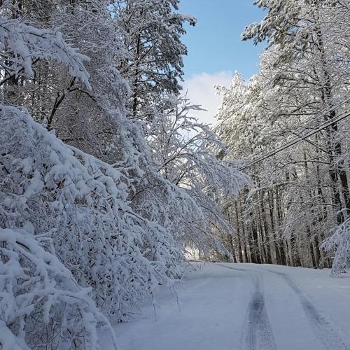 A Walk in the Snowy Woods (Woodstock, Georgia, USA - Dec 10 2017)