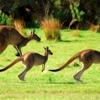 ASMR Adventures #5 - Australia