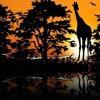 African Sunset | World Music, Ethnic Music, Kalimba, Flute, Vocal