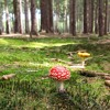 1708   A carbon home: carpet like a forest and furniture like mushrooms