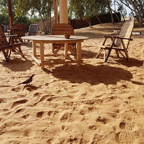 Senegal village ambience with birds and people