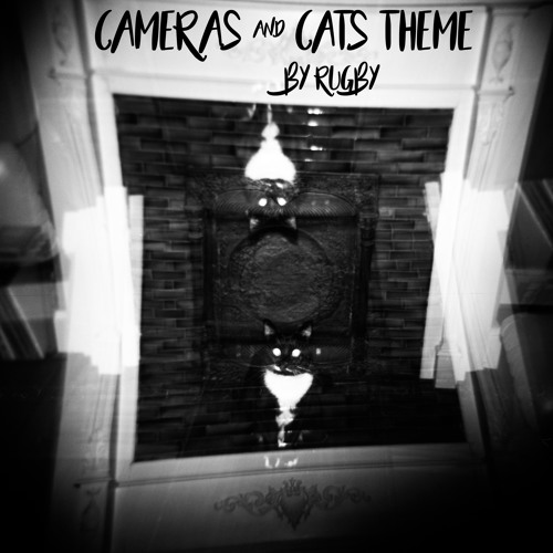 Cameras and Cats Them Song