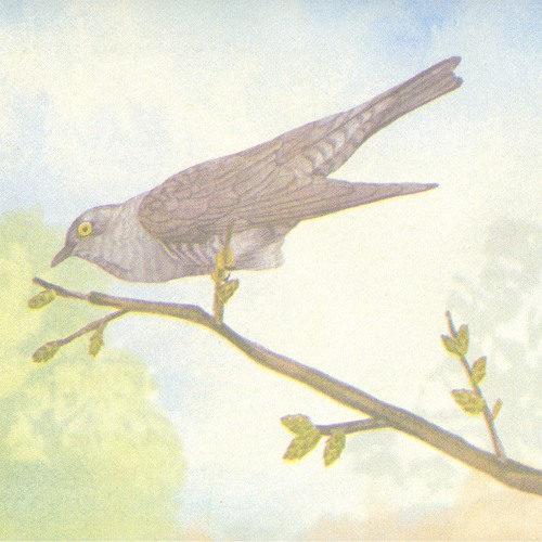 Sparrows - Mix for The Lesser Cuckoo