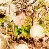 【Asane Hana ANEMONE】 Light A Candle 【UTAU cover】 + UST