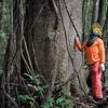 AMAZÔNIA: BANCO MUNDIAL APOIA PRESERVAÇÃO EM TRÊS PAÍSES