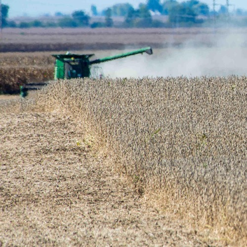 How did the soybean become such a common crop in the U.S.?
