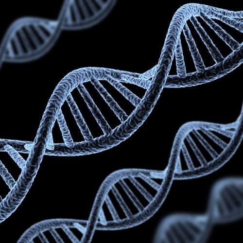 About Circadian Rhythm Genes