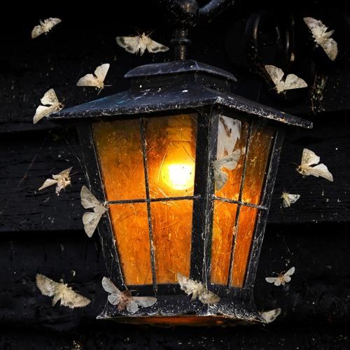 Moth (Brooklyn Wind Symphony)