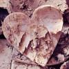 Wooden Heart (Original Mix) [FREE DOWNLOAD]