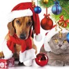 Dog And Cats Singing Jingle Bells