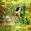 Folding Book Art - The song of the Goldfinch