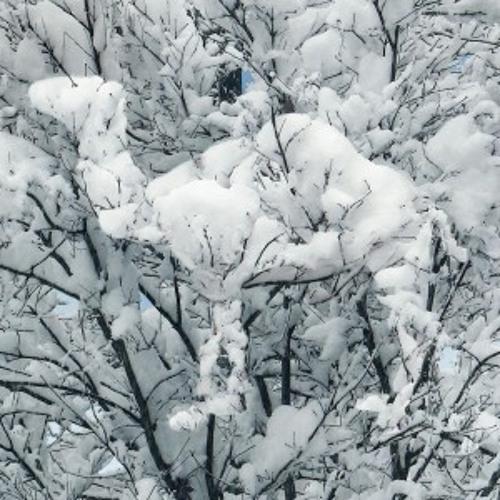 Snow Camel (FREE DOWNLOAD)
