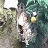 The Birdfeeder Waltz