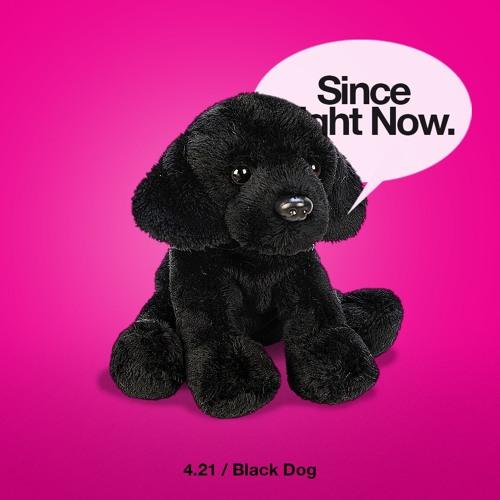 4.21 Black Dog
