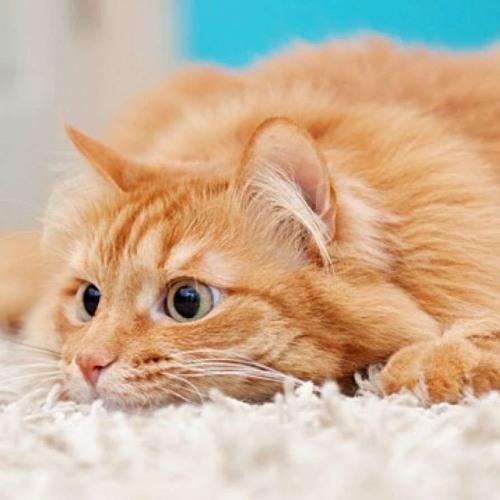 HESITATION KILLED THE CAT (2018)